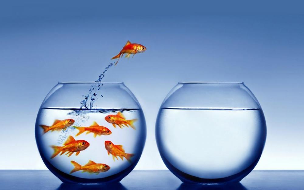 introvert-goldfish